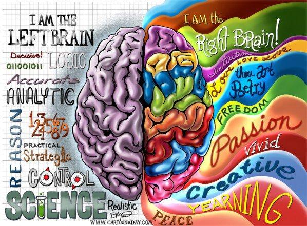 Hemisferio izquierdo y derecho - diferencias entre zurdos y diestros