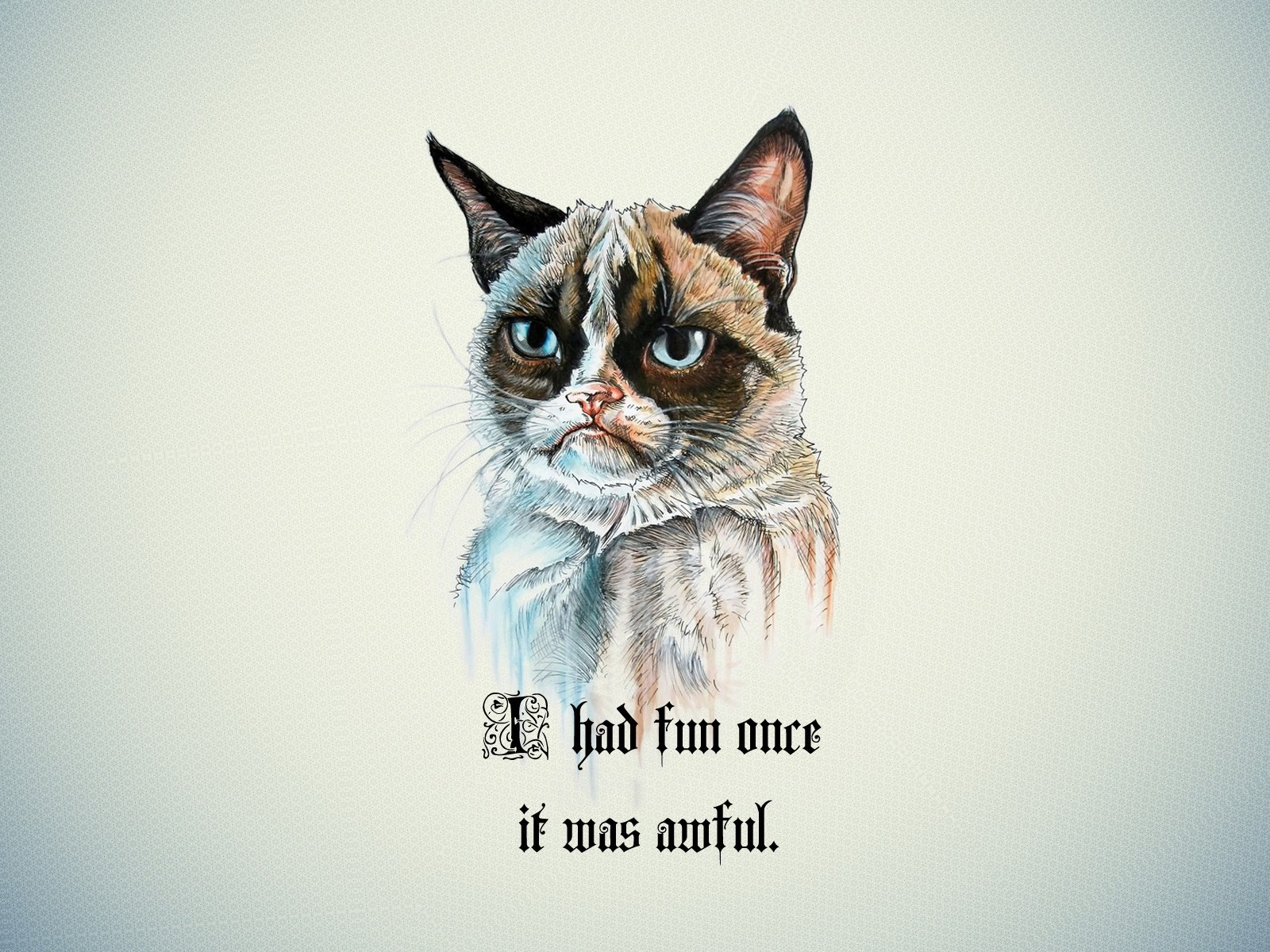gallery for funny grumpy cat wallpapers