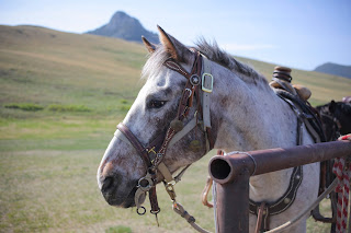 Horse in Montana