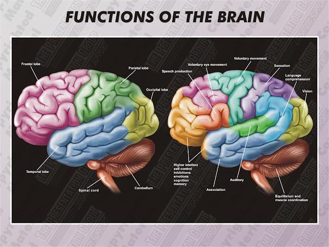Brain Function Map6