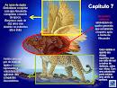 Império Grego - Profeta Daniel