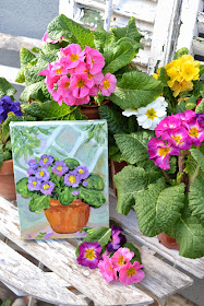My Painted Garden Winter Primroses Here There Everywhere