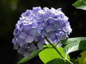 田舎暮らしを賃貸の古民家廃屋でBlogの花