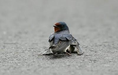 Jutaan Orang Menangis Melihat Foto Burung Ini