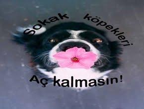 Sokak Köpekleri Aç Kalmasın!