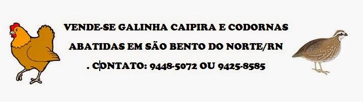 GALINHA CAIPIRA E CODORNAS ABATIDAS EM SÃO BENTO DO NORTE/RN. CONTATO: 9448-5072 OU 9425-8585