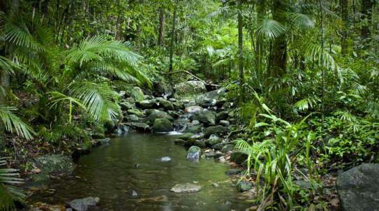 Daintree  National Park di Far North Queensland, Australia,  yang berisi  hutan  hujan berusia 110 juta tahun―salah satu ekosistem  tertua di bumi