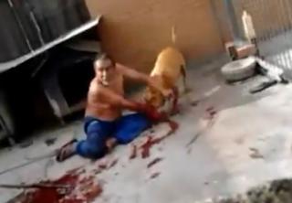 Pitbull+destroza+brazo+a+un+hombre Pitbull destroza brazo a un hombre