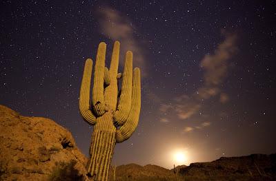 Saguaro cactus (Carnegiea gigantea) lit by a military drop flare