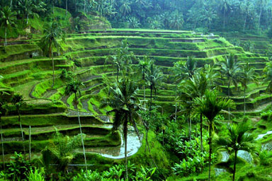 Ubud Has Also Been Used As A Filming By Renowned Artist