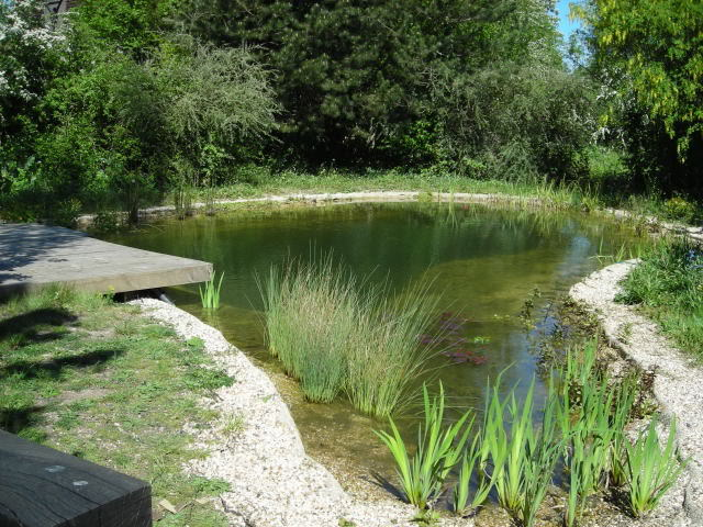 From the pondlady 39 s pad how to build a natural swimming pond for Creating a pond