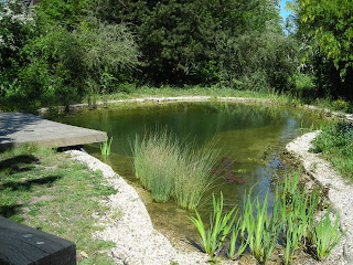 From the pondlady 39 s pad how to build a natural swimming pond for How to build a natural swimming pool pond