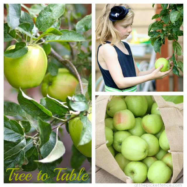 From tree to table...apple picking recipes and party ideas