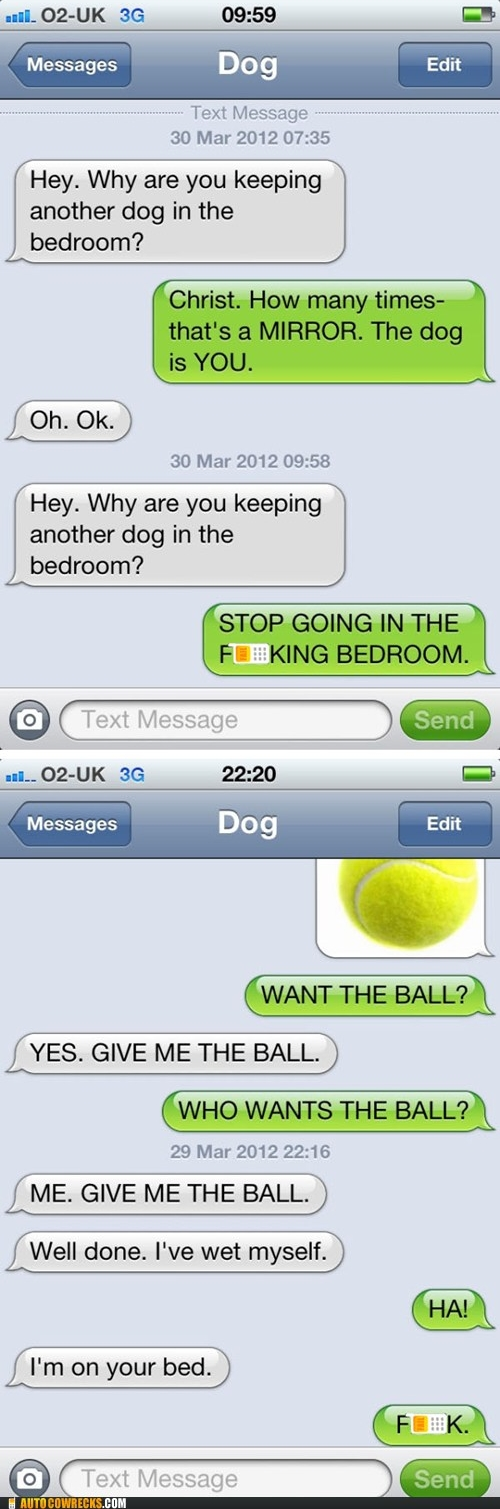 funny pictures, funny, if dogs can text, smartphone, dogs