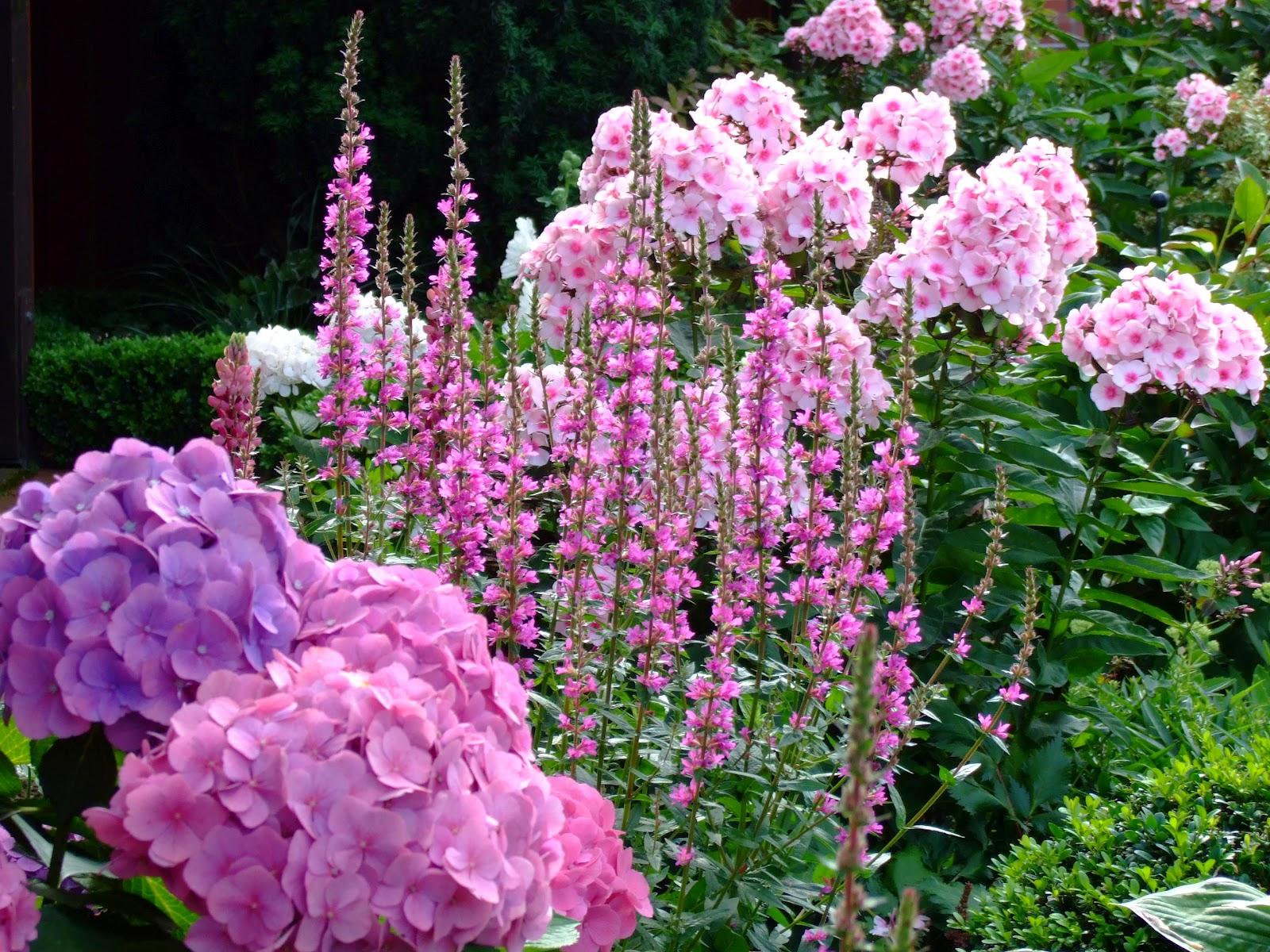 Welche Blumen Bl Hen Im September blumen für schatten blumen f r balkon im schatten pflanzen blumen fur balkon im schatten