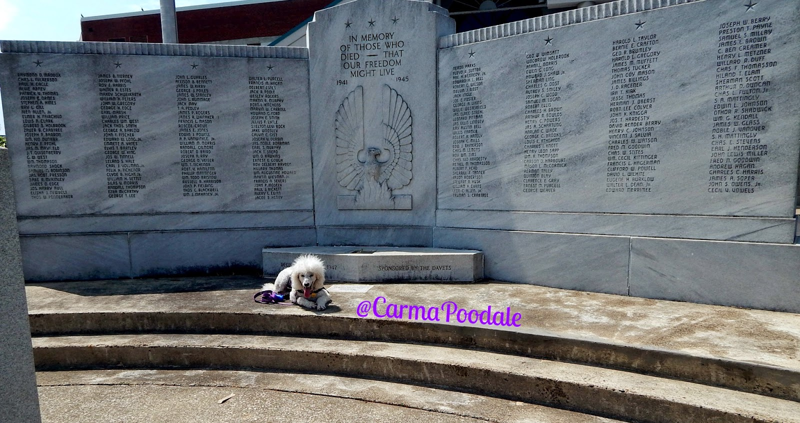 dog laying on steps of monument
