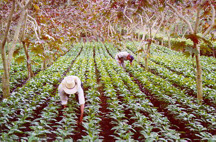 coffee farmers working conditions