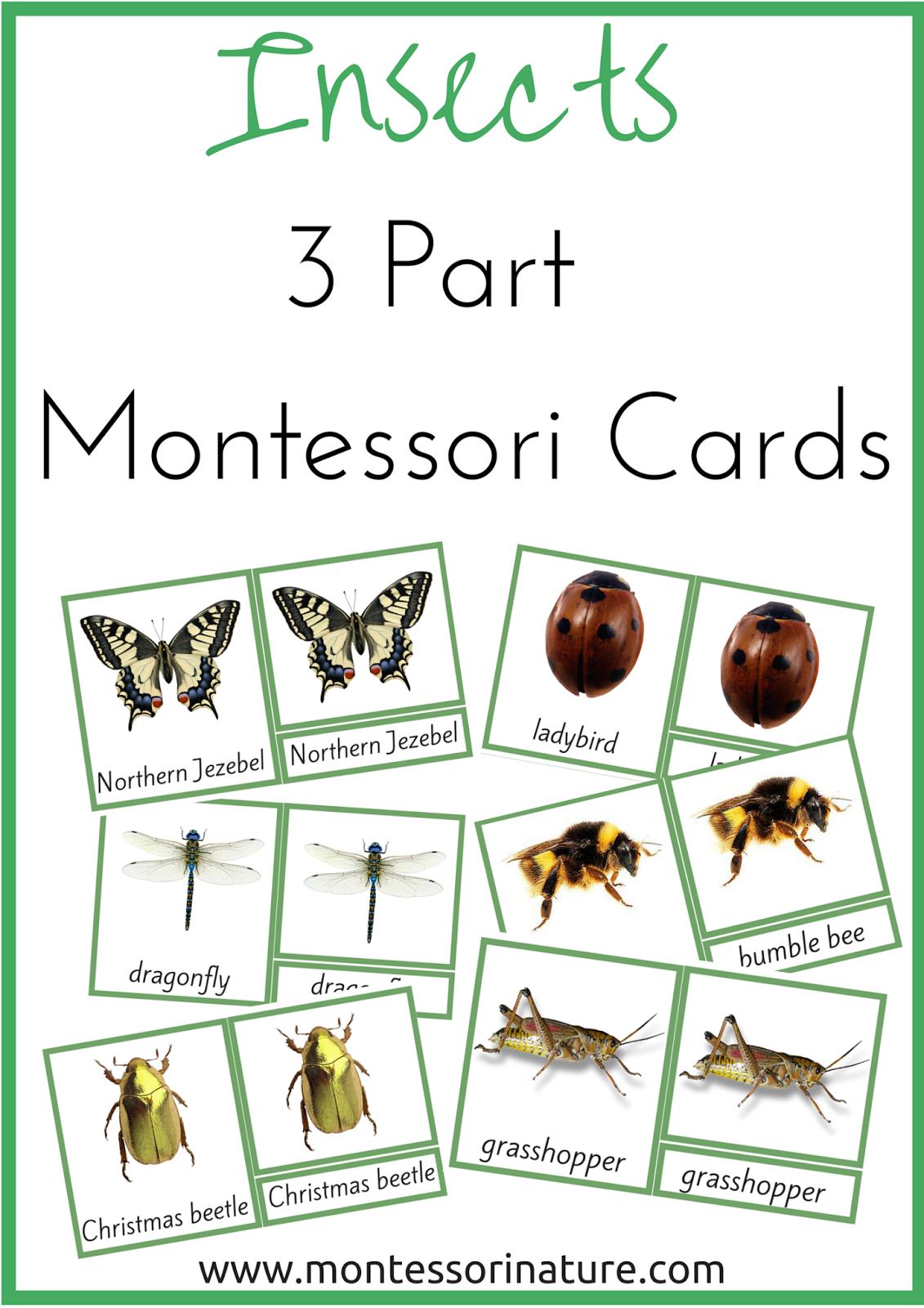 insects 3 part montessori nomenclature cards montessori nature