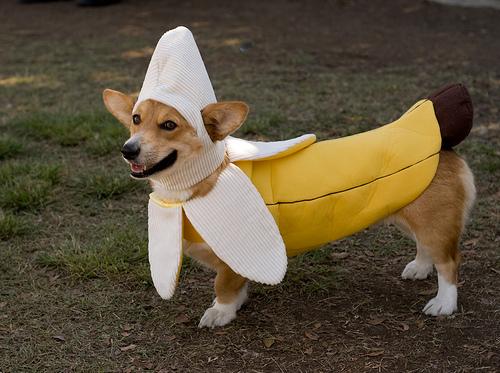 FOTO ed immagini divertenti di Animali PaginaInizio