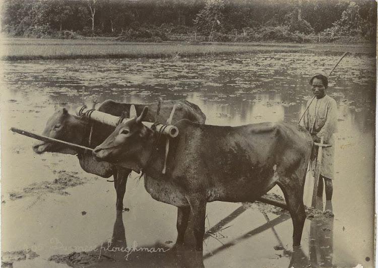 Burmese Farmer - Burma (Myanmar) c1900's
