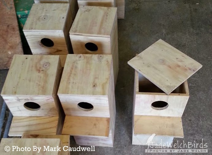 lorikeet nest boxes nestbox jadewelchbirds jade welch