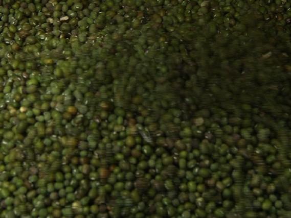 Kacang Hijau, Sehat Dan Mengenyangkan
