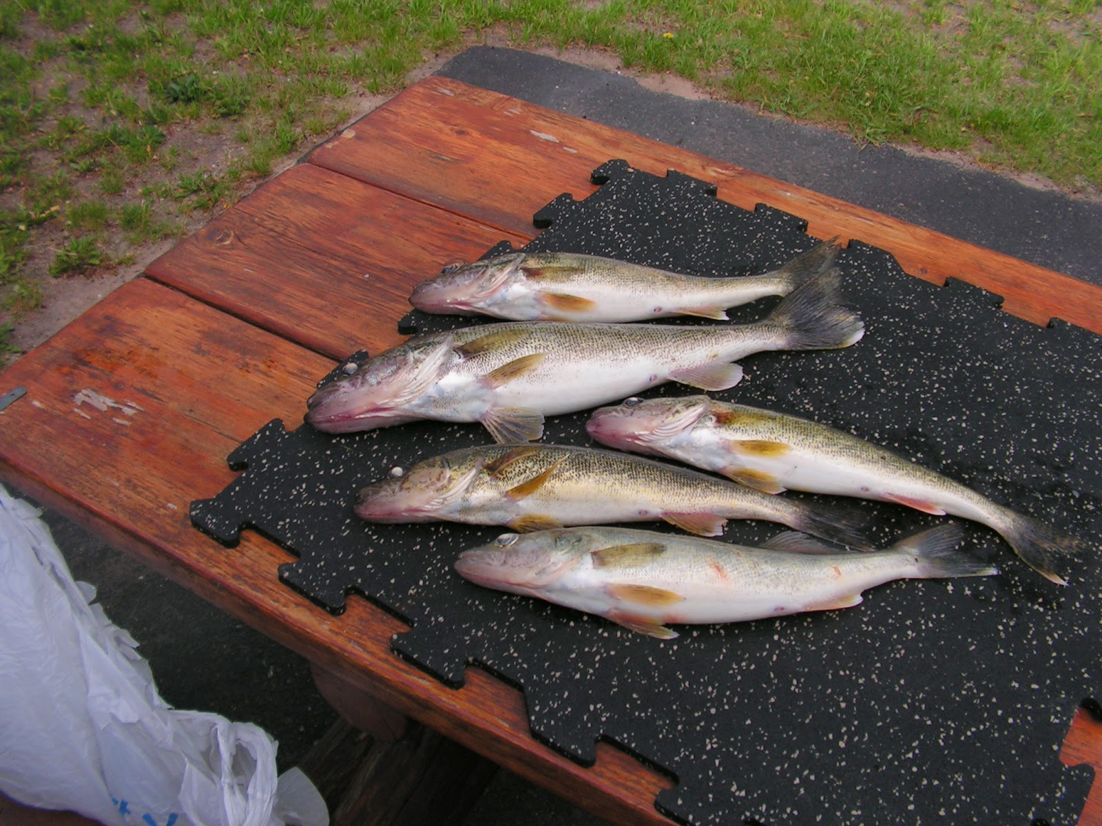 Ace 39 s houghton lake fishing report monday 6 2 report for Houghton lake fishing report