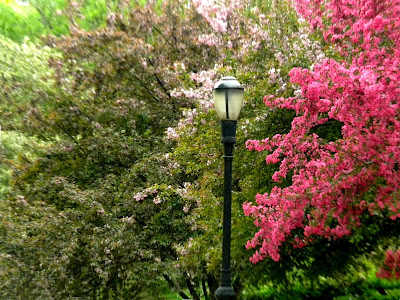 Spring Riverside Park New York City