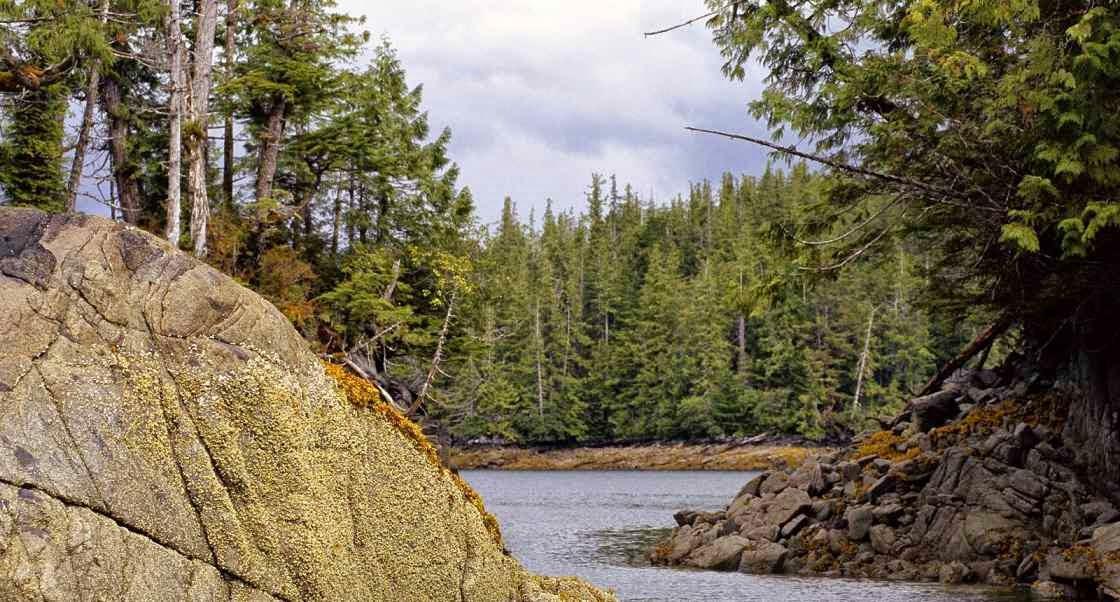 Bosques templados y biologia de los ecosistemas