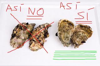 colocación correcta de las ostras