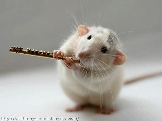 Rat with a flute