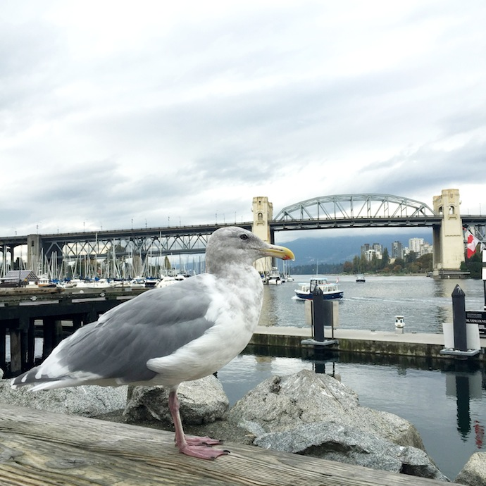 Bench Canada Polaroid Project Vancouver Granville Island