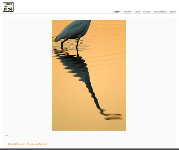 http://www.naturephotoblog.com/2016/01/10/12843/oriol-alamany/