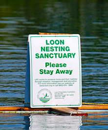 Protecting Loons in New Hampshire