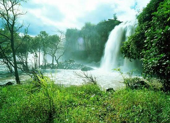 Thưởng ngoạn những khu rừng đẹp nhất Việt Nam4