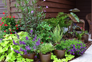 Cara Menanam dan Merawat Tanaman atau Bunga di Pot