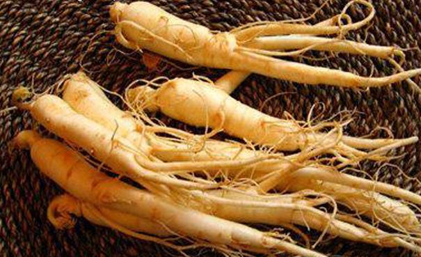 Image result for gambar ginseng