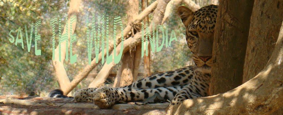 wildindia