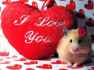 i love you heart romantic love