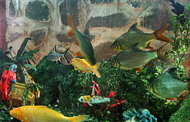 fish tank with colourful fish