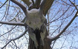 Mein Schamanenbaum