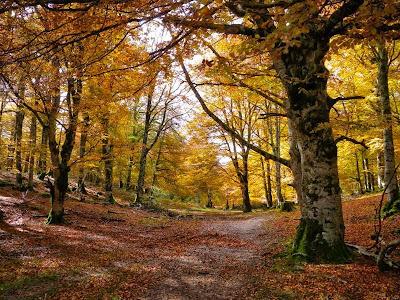La ruta del Hayedo Encantado imprescindible en otoño