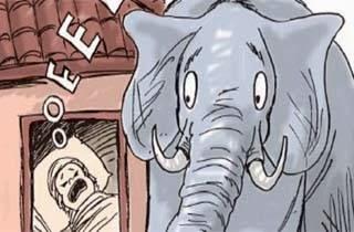 Gajah Berhenti Mengamuk Karena Selamatkan Bayi Manusia