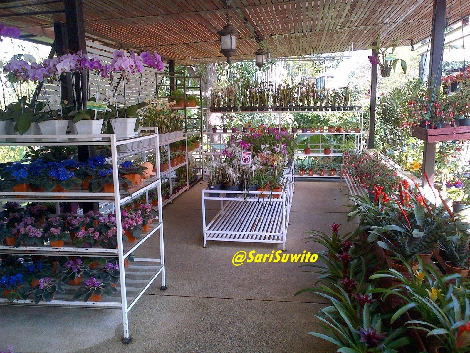 mae+fah+luang+garden-4.jpg