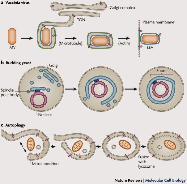 Những thành tựu mới về tiến hóa sinh học tiền tế bào -Tài liệu ôn thi bác sĩ nội trú - Môn Y sinh học Di truyền