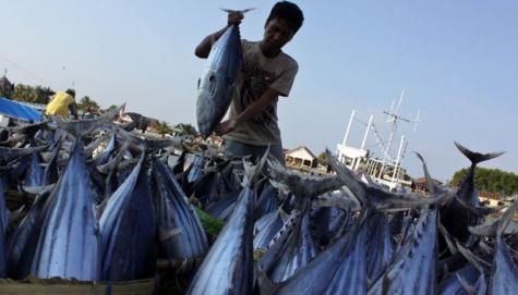 Industri Pengalengan Tuna di Asia Tenggara Dinilai Tak Ramah Lingkungan