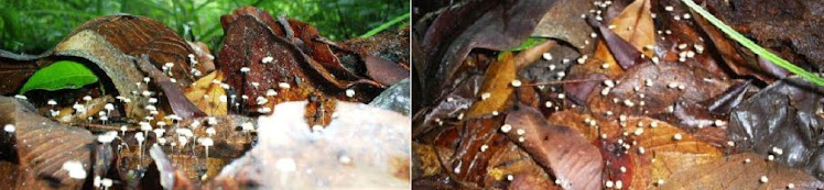 Serrapilheira e a ação dos fungos