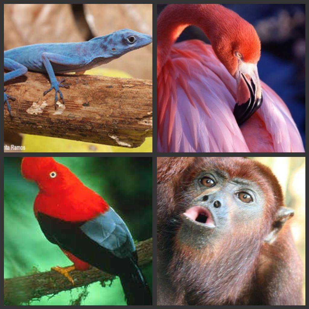 фауна это фотографии