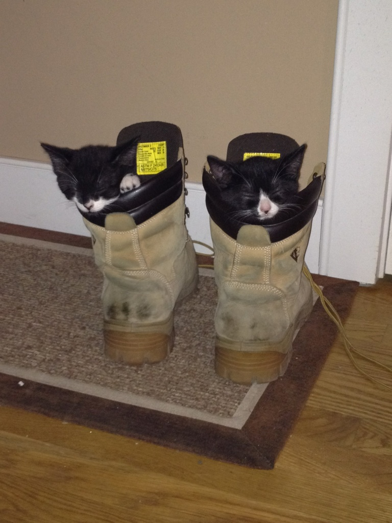 funny cats, cute cat pictures, puss in boots