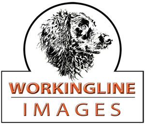 WORKINGLINE IMAGES
